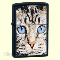 Зажигалка Zippo 28040 Blue Eyed Cat